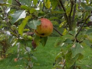 Garten Weden 09 023