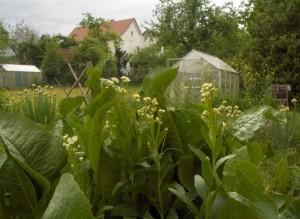 Gartenfotos Mai 11 005