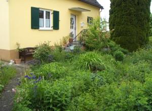 Gartenfotos Mai 11 007