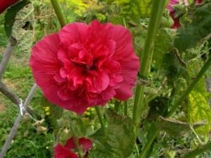 Garten Weden 09 001