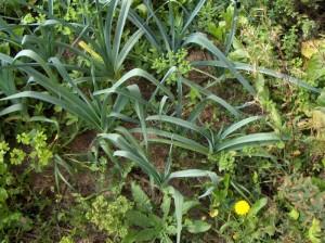 Garten Weden 09 008