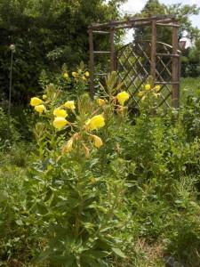 Garten Juli 2013 017