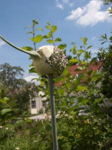 Garten Juli 2013 020