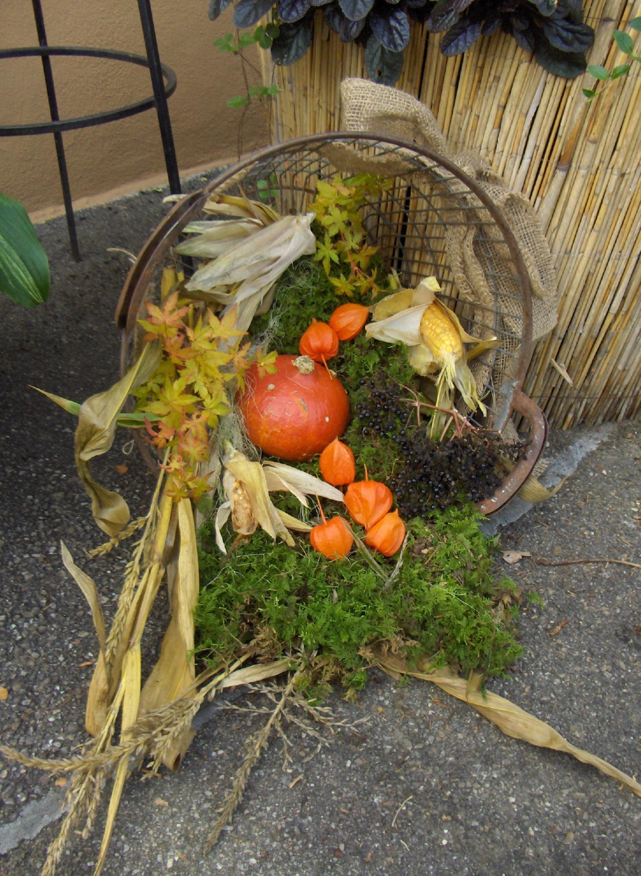 Garten Im September : mein garten im september garten weden blog ~ Watch28wear.com Haus und Dekorationen