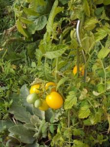 Garten Weden 09 007